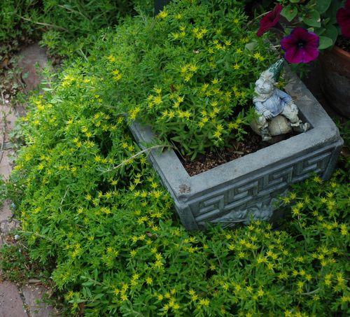 2010 garden 008