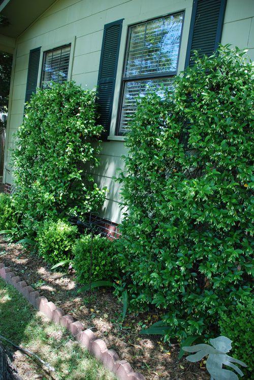 2010 garden 019