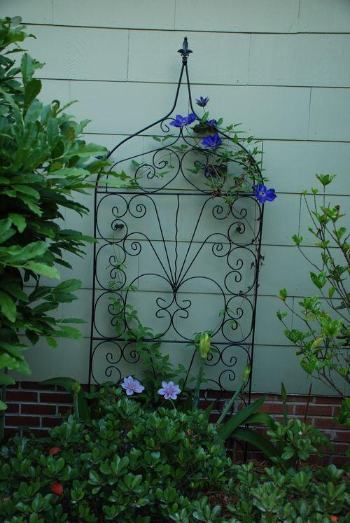 2010 garden 020