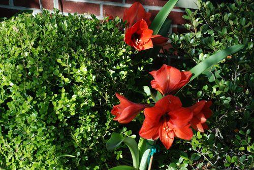 2010 garden 003